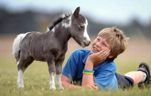idei-pentru-cadouri-ponei-in-miniatura-01