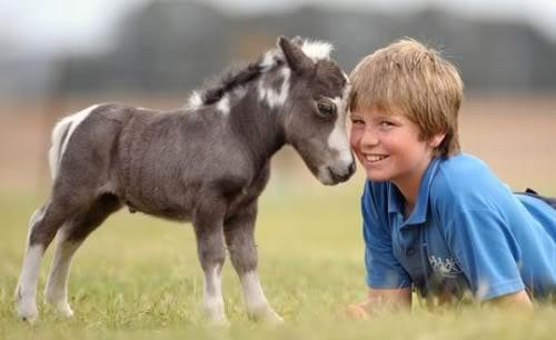 idei-pentru-cadouri-ponei-in-miniatura-02