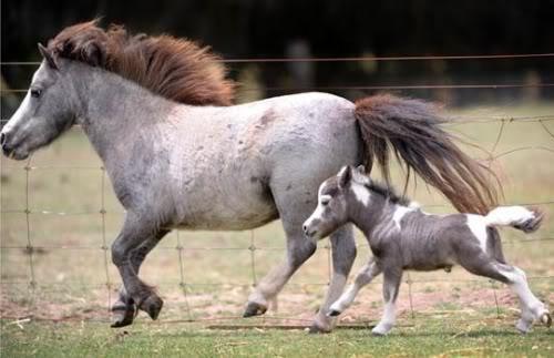 idei-pentru-cadouri-ponei-in-miniatura-04