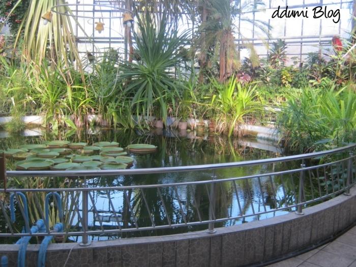recreere-in-gradina-botanica-alexandru-borza-07