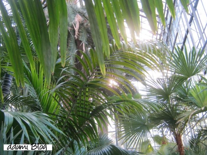 recreere-in-gradina-botanica-alexandru-borza-08