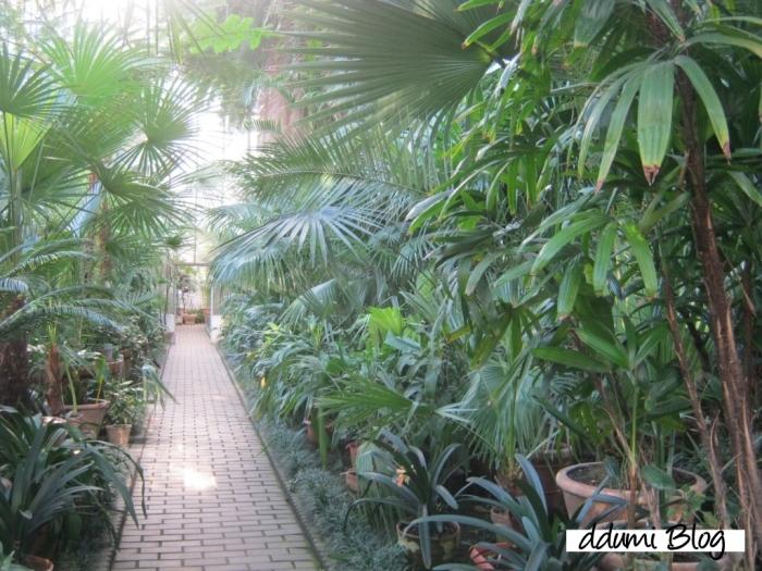 recreere-in-gradina-botanica-alexandru-borza-09