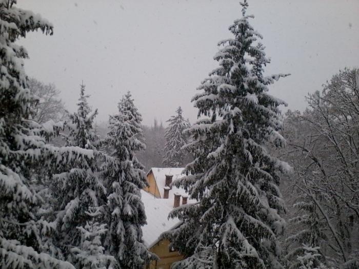 iarna-in-gradina-botanica-alexandru-borza-6